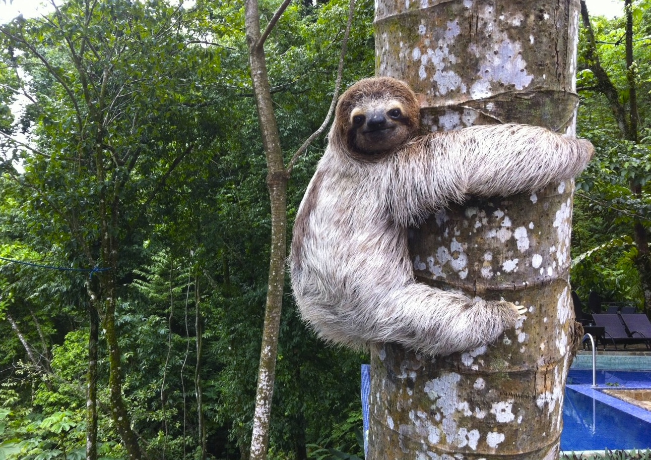 Kid's Saving the Rainforest Tour