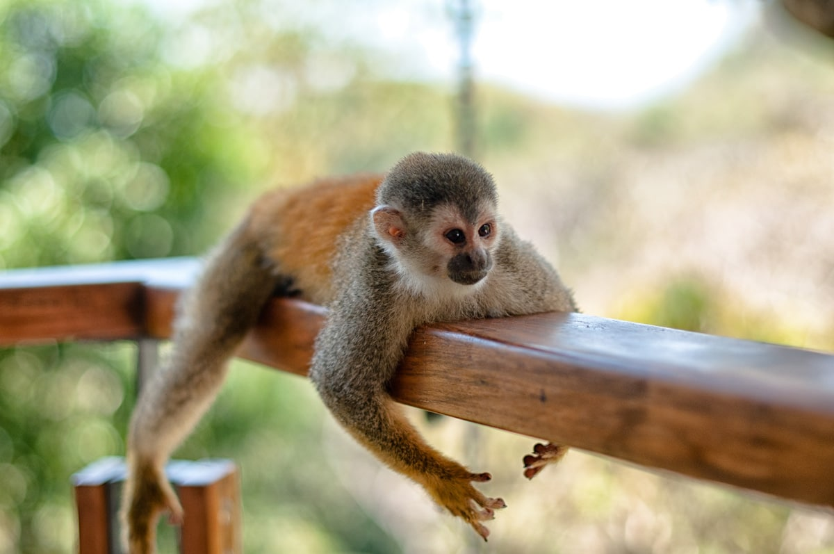 Wildlife Tours in Costa Rica
