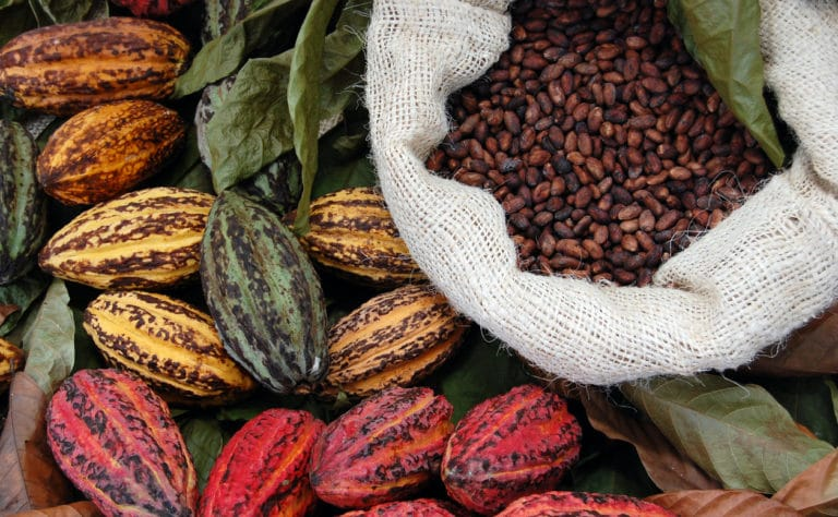 spice farm tours in costa rica
