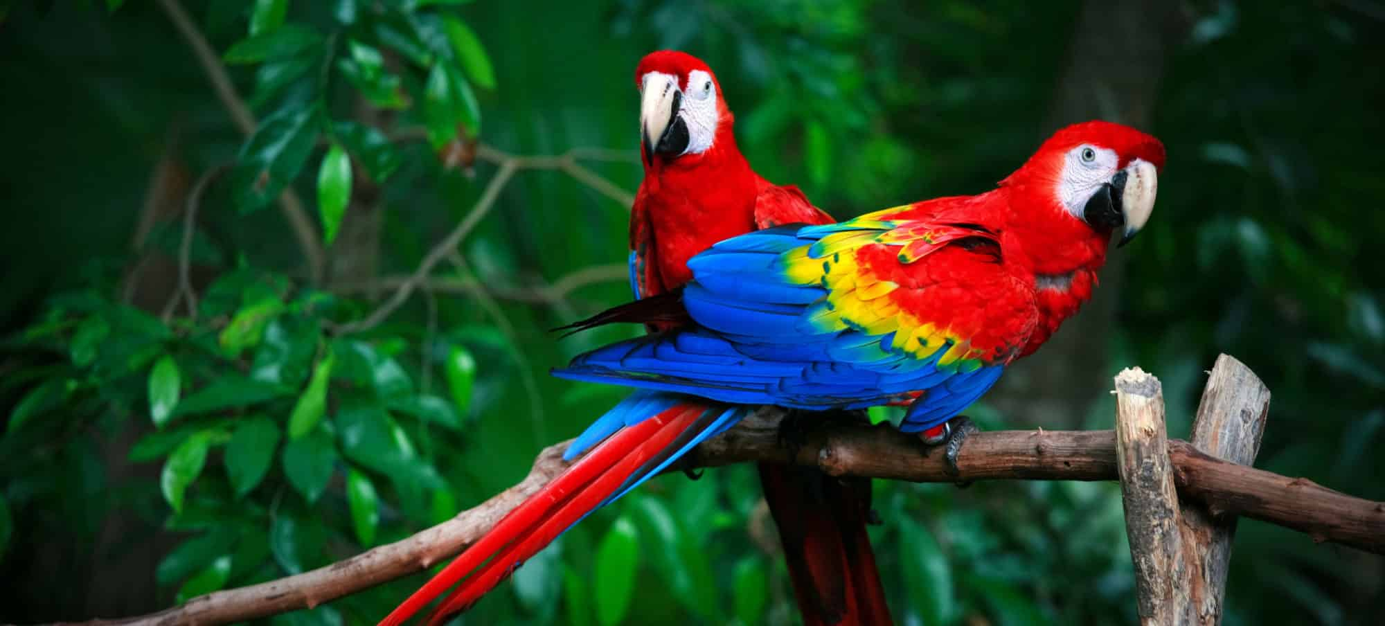 wildlife tours in costa rica